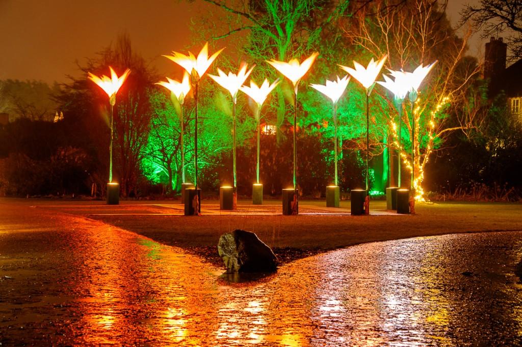 illuminate design ltd royal horticultural society
