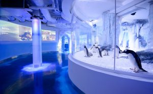 Young visitors at the new Penguin Point attraction at SEA LIFE London Aquarium – opening 28 May. Gentoo penguins exploring their new space at SEA LIFE London Aquarium – opening 28 May